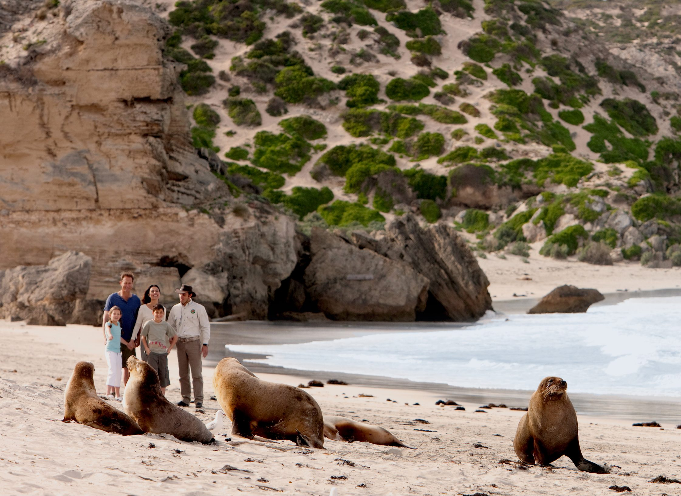 Kangaroo Island Shore Excursion - Scenic & Wildlife Tour